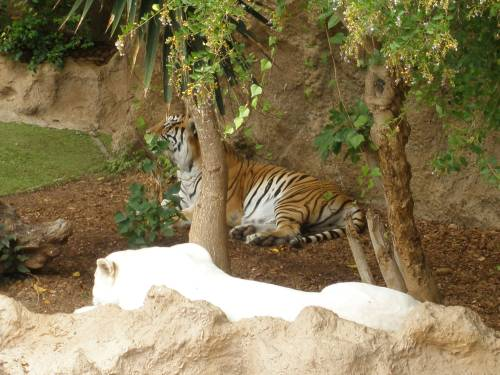 Tigerinsel Loropark
